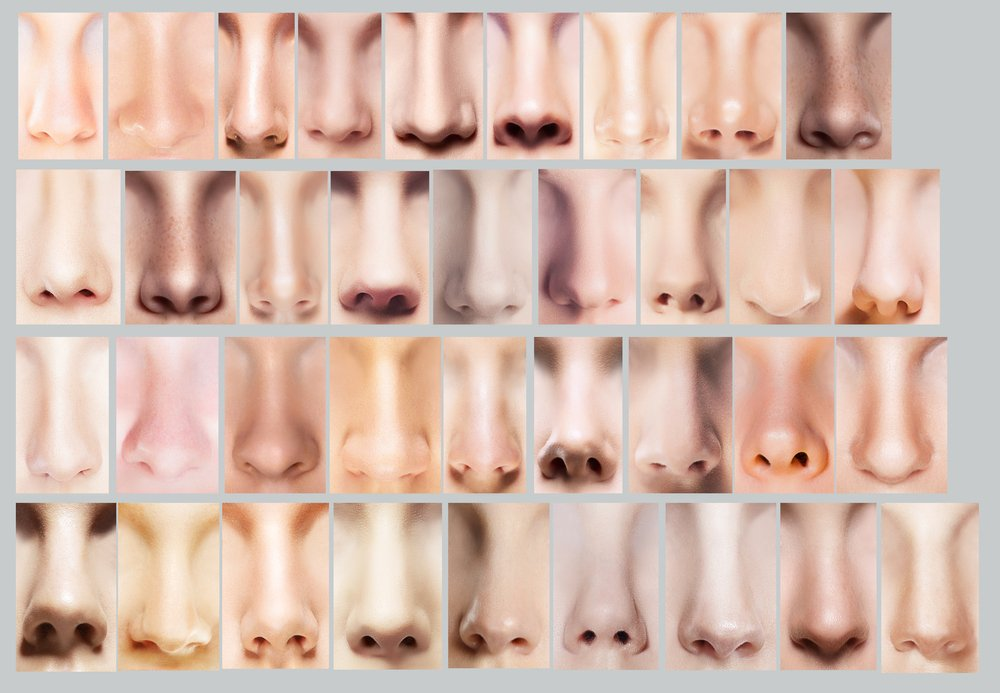 sniffing out nose shapes the 12 most common nose types zwivel