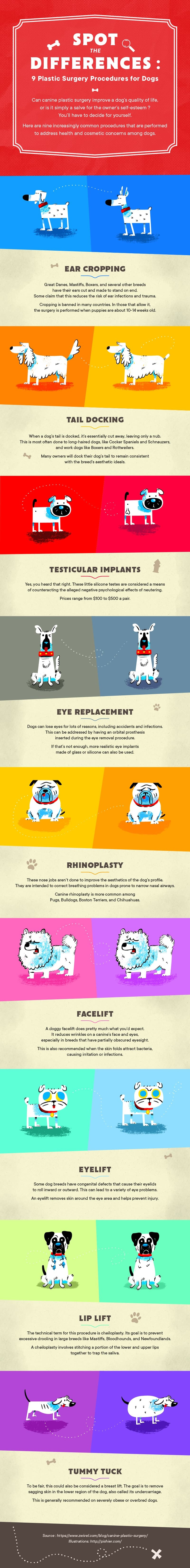 plastic surgery dogs infographic zwivel